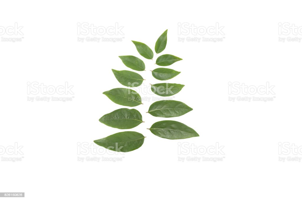 Leaves Phyllanthus acidus on a white background stock photo
