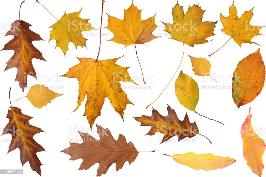 leaves - foto stock