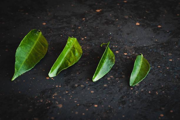 Leaves – zdjęcie