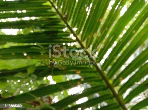 istock Leaves 1347865069