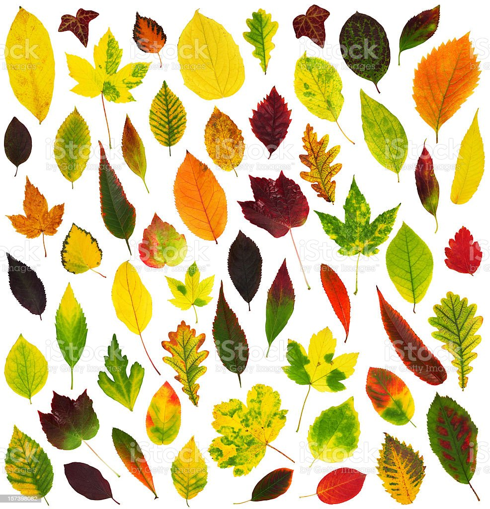 Leaves (XXL) royalty-free stock photo