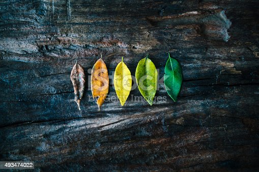 Five leaves on wooden background