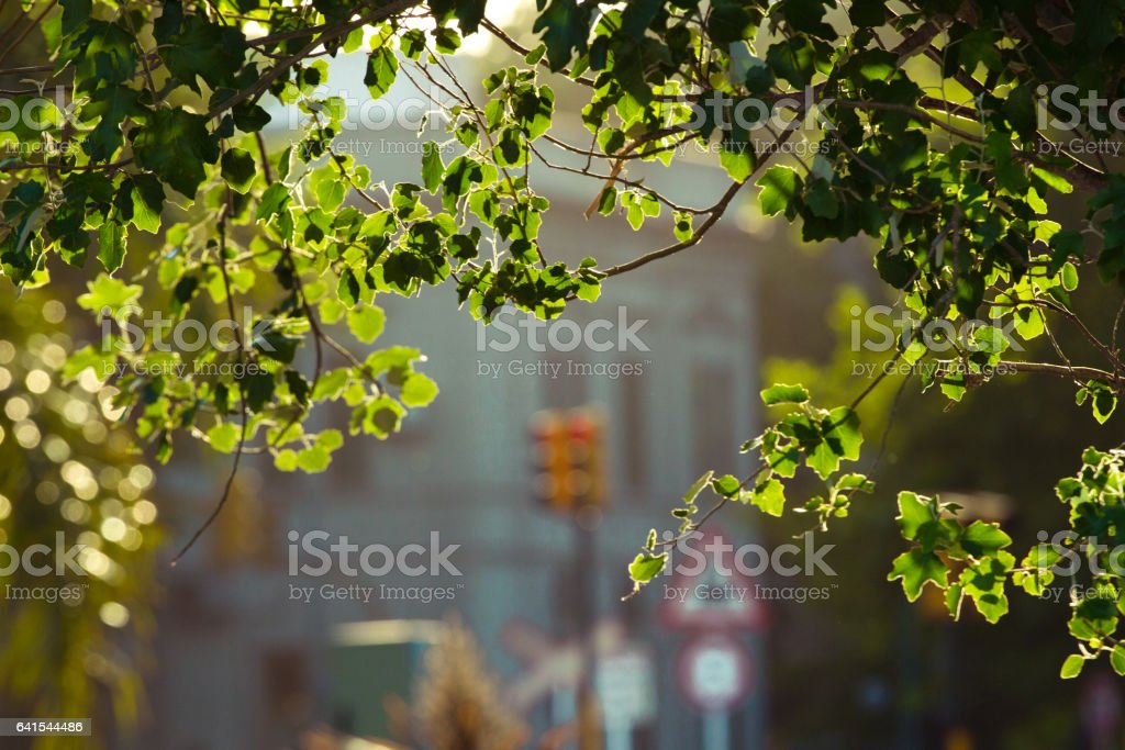 Leaves foto