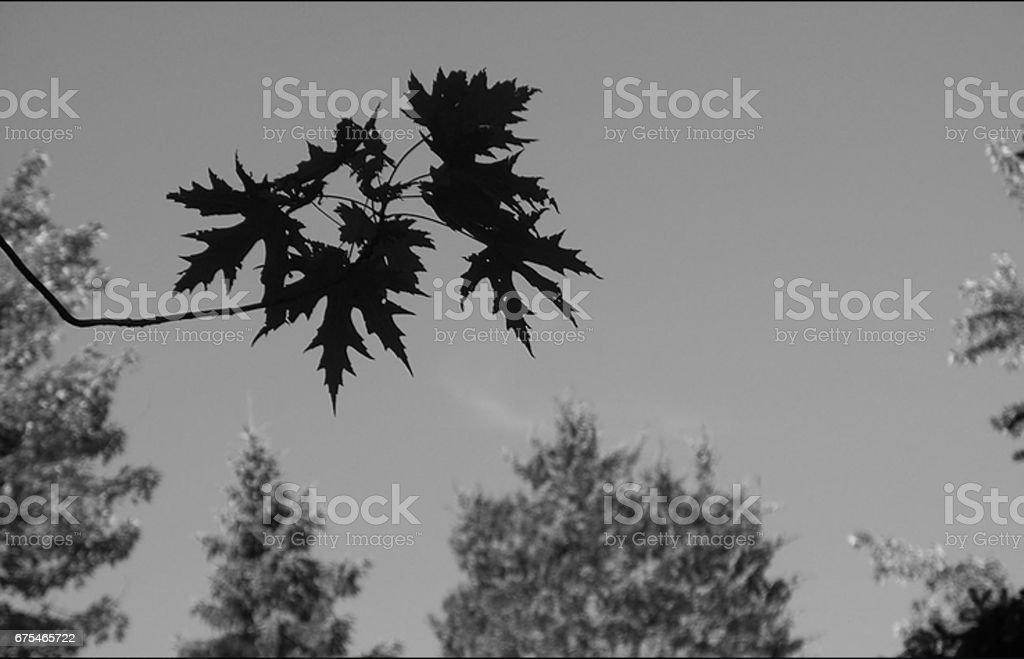 leaves photo libre de droits