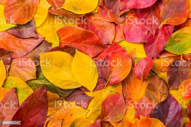 Leaves picture id888995042?b=1&k=6&m=888995042&s=612x612&h=6cwbsugpozw5znynv3 boafjmk9vo j qhqlvzgxofe=