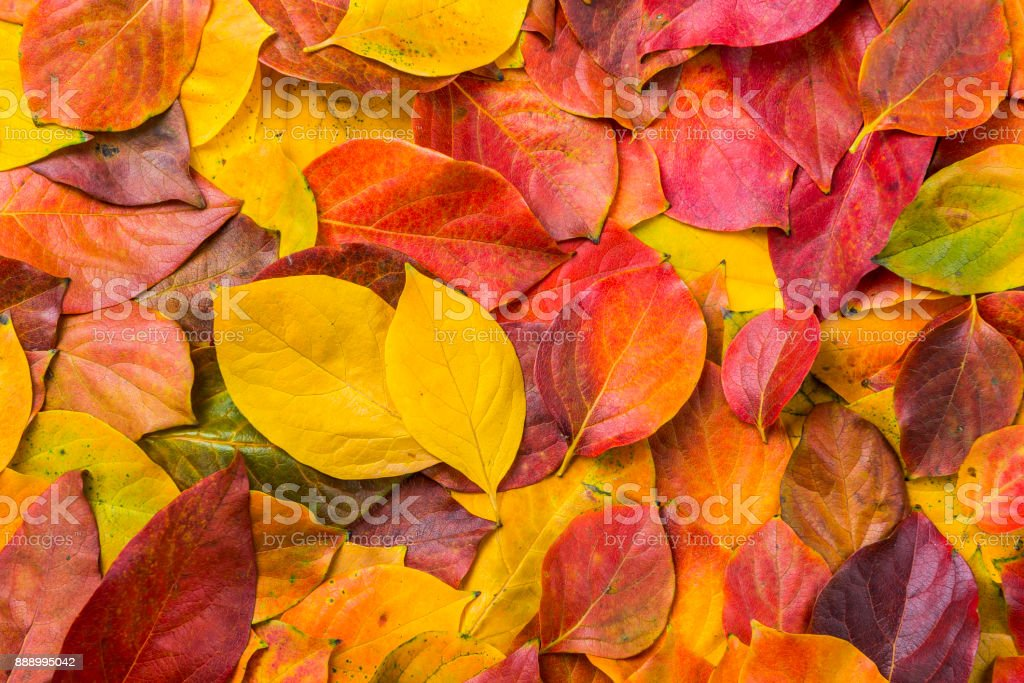Leaves - foto stock
