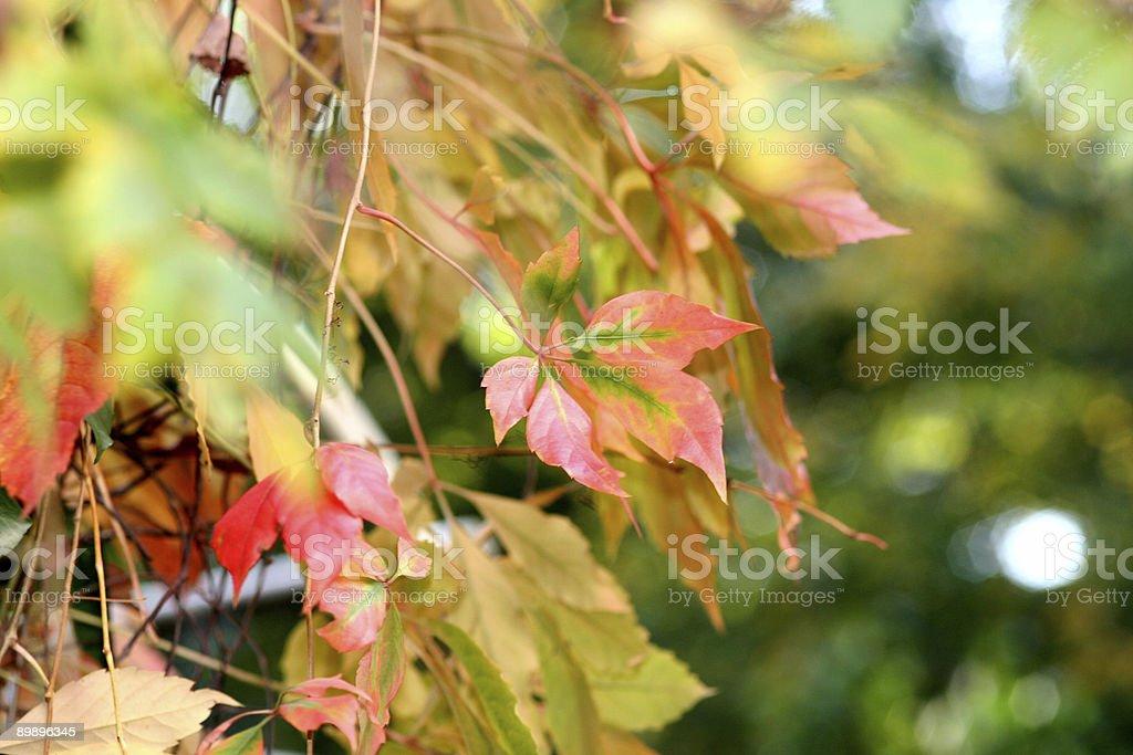 Листья Стоковые фото Стоковая фотография