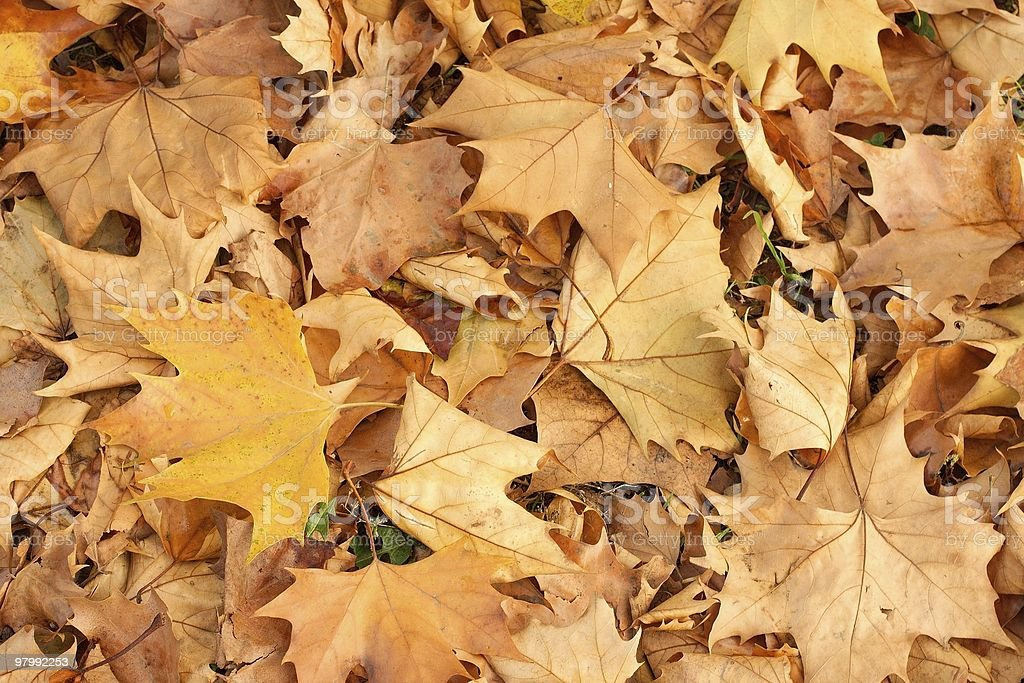Leaves royalty free stockfoto