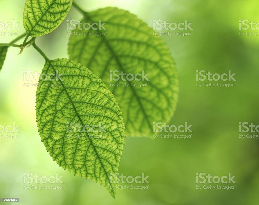 잎 royalty-free 스톡 사진