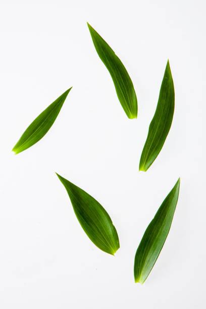 leaves, plants, and grasses on the white background - filo d'erba foto e immagini stock