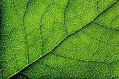 istock Leaves Series 153265195