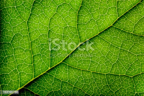 Close-up of a leaf.
