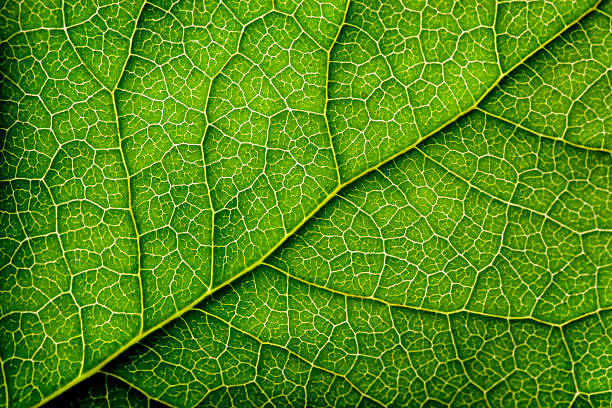Leaves Series stock photo