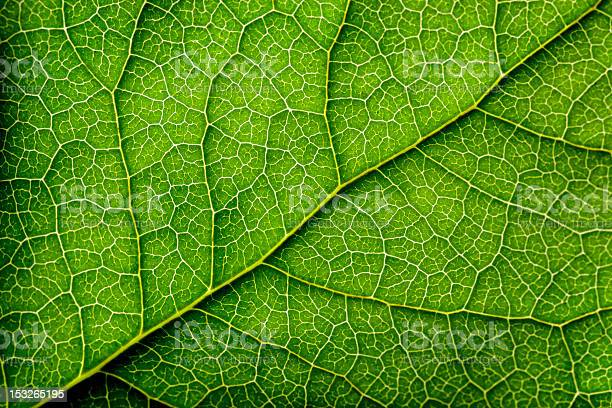 Photo of Leaves Series