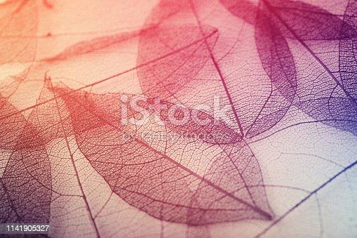 638812700istockphoto Leaves skeleton background 1141905327