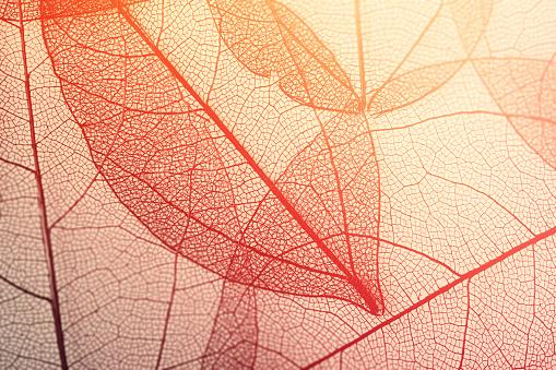 istock Leaves skeleton background 1141905331