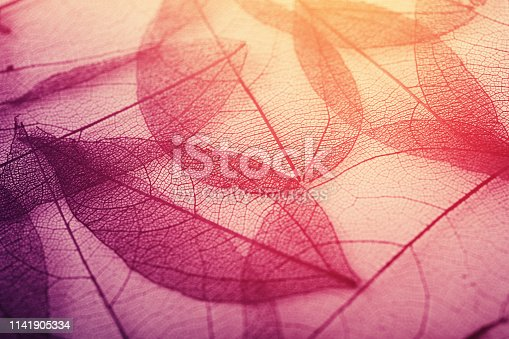 638812700 istock photo Leaves skeleton background 1141905334