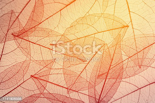 istock Leaves skeleton background 1141905335