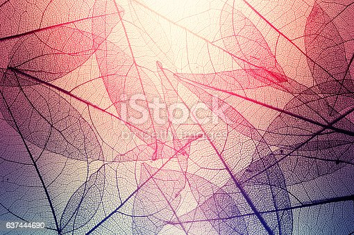 istock leaves skeleton background 637444690