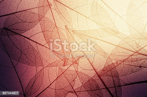 istock leaves skeleton background 637444822