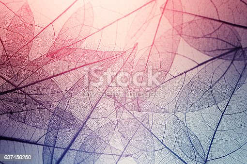 istock leaves skeleton background 637456250
