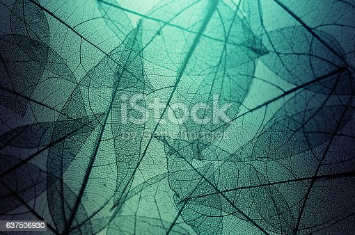 istock leaves skeleton background 637506930