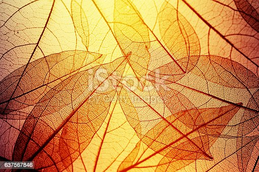istock leaves skeleton background 637567846