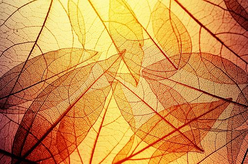istock leaves skeleton background 637567846