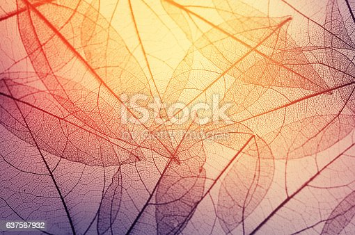 istock leaves skeleton background 637567932