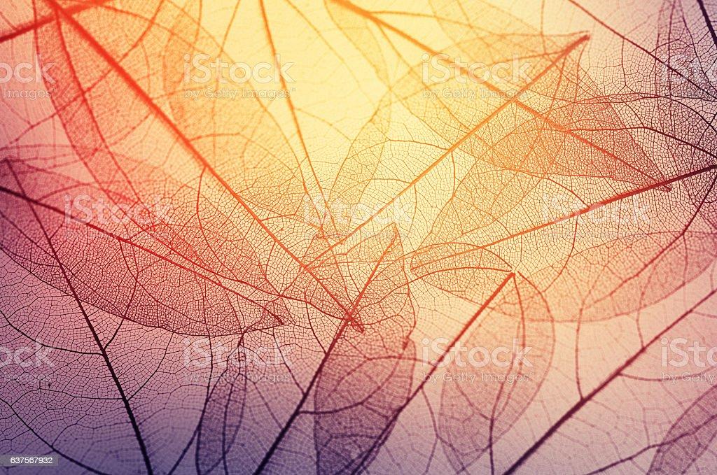 leaves skeleton background stock photo