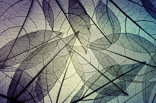 istock leaves skeleton background 637586094