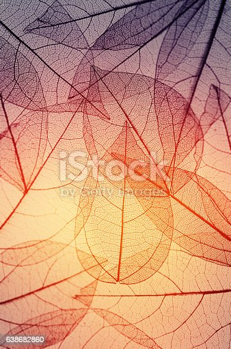 istock leaves skeleton background 638682860