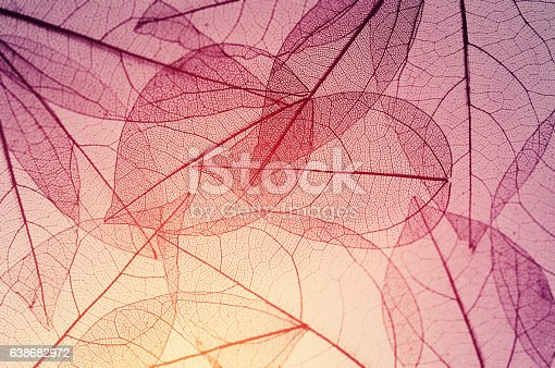 istock leaves skeleton background 638682972