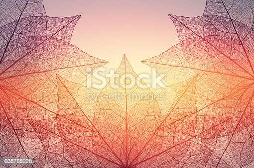 istock leaves skeleton background 638768228