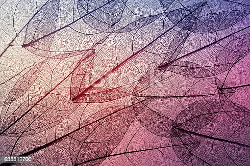 istock leaves skeleton background 638812700