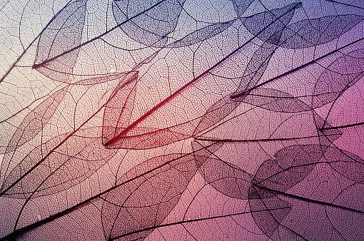 istock leaves skeleton background 638812700