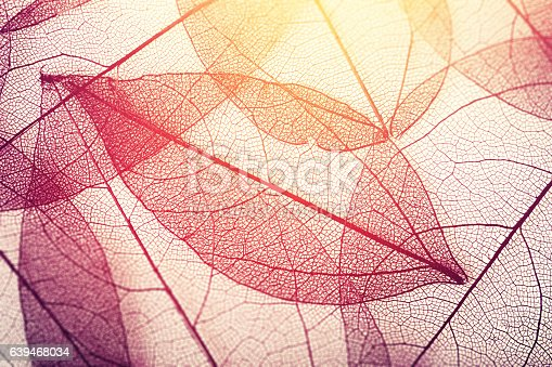 istock leaves skeleton background 639468034