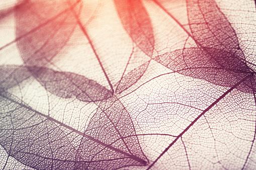 istock leaves skeleton background 639812350