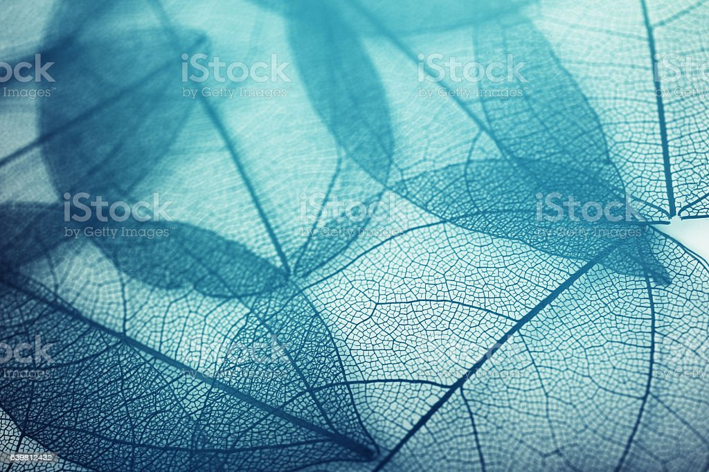 leaves skeleton background stock photo