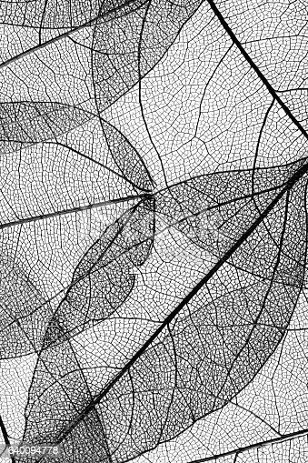 638812700istockphoto leaves skeleton background 640094778