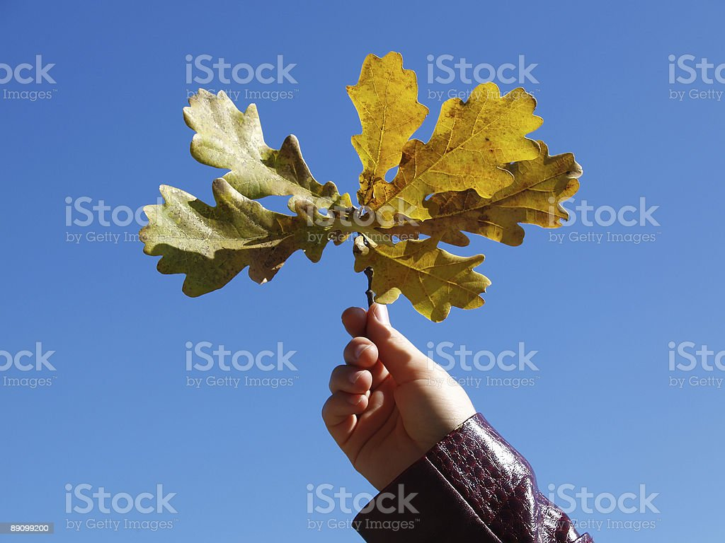 Leaves. Sky royalty-free stock photo