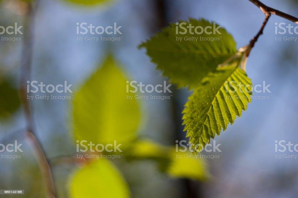 Leaves summer sky zbiór zdjęć royalty-free