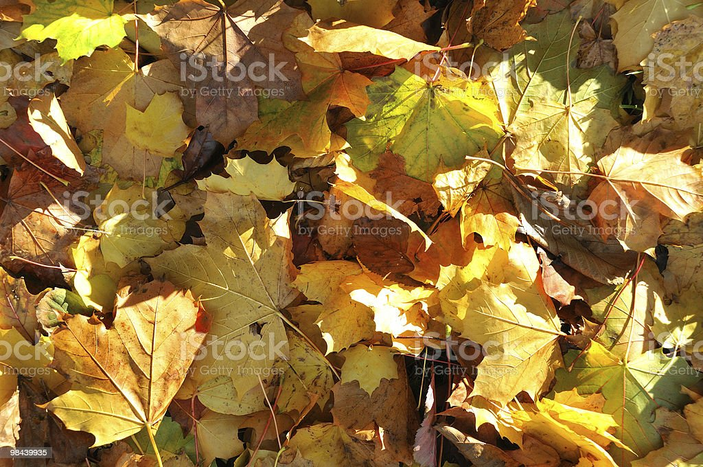 Leaves two royalty-free stock photo