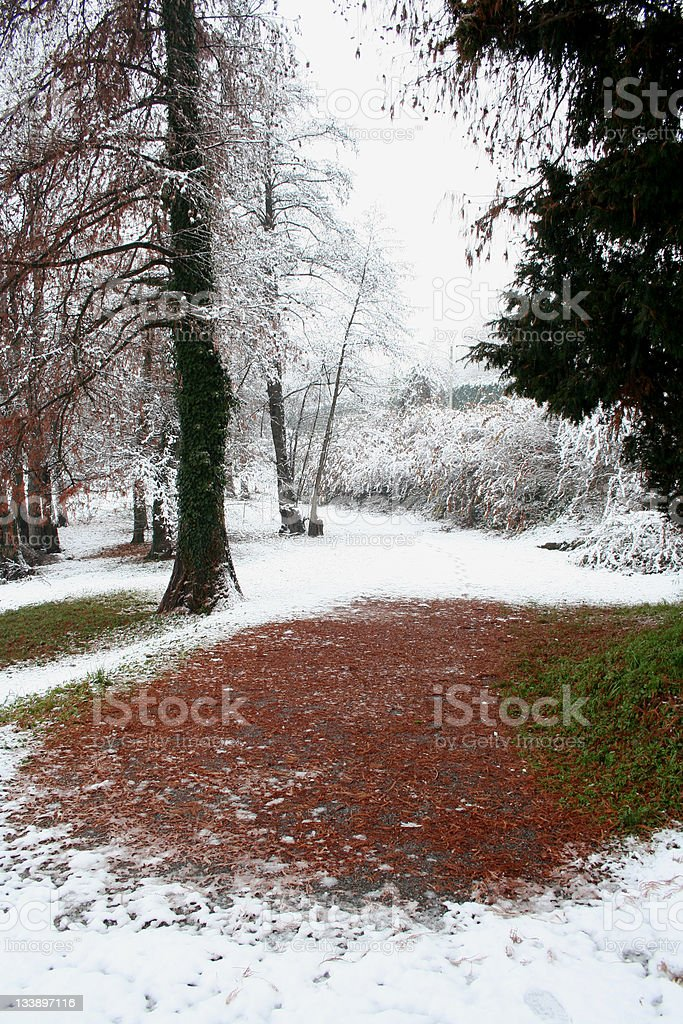 leaves under snow during winter season royalty-free stock photo