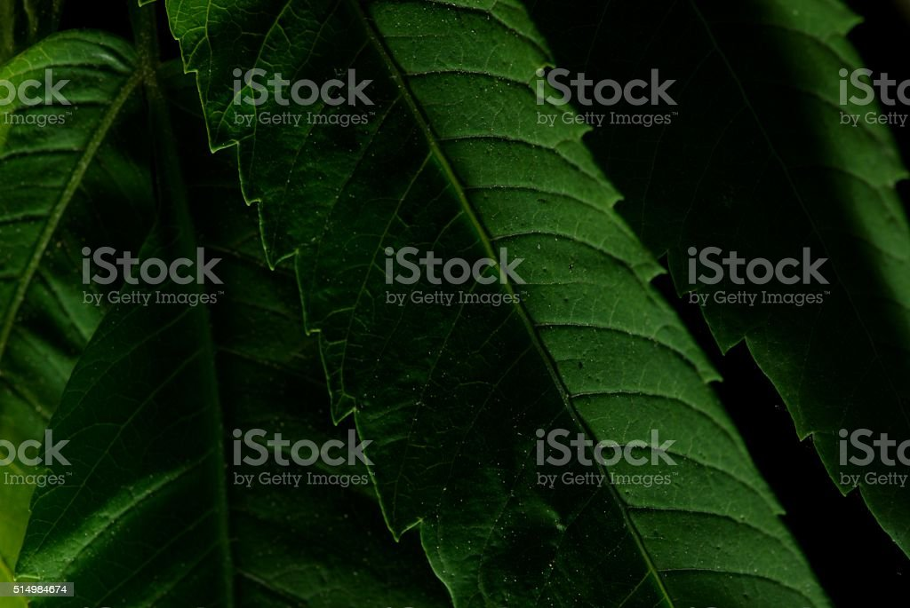 Leaves, up close and pretty take 3 stock photo