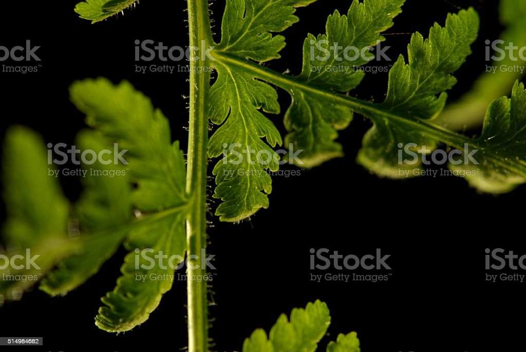 Leaves, up close and pretty take 5 stock photo