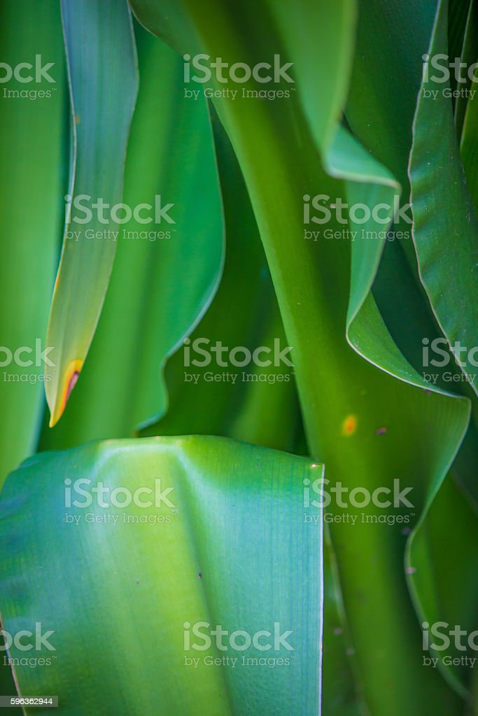 leaves up close royalty-free stock photo