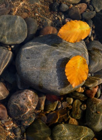 1131408581 istock photo Leaves, Water and Stone 172402720