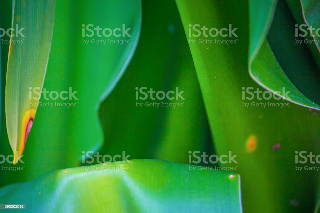 Leaves with a pop of color royalty-free stock photo