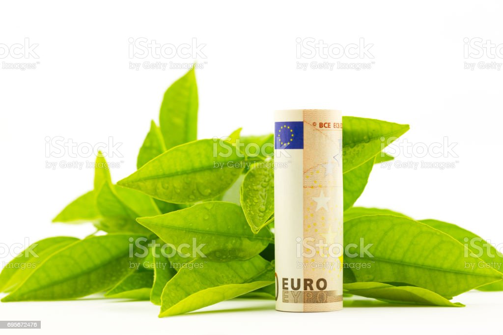 Leaves with dew drops behind euro currency reflects fresh financial environment stock photo